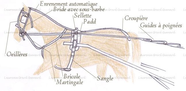 http://attelagepeda.info/image-site-ok/harnais-course.jpg