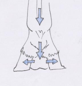 les articulations du pied pdf